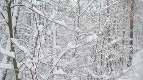 Nevicando nei mucchi della foresta della caduta della neve a volte video d archivio