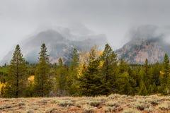 Nevicando nel Tetons Fotografia Stock Libera da Diritti
