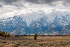 Nevicando nel Tetons Immagini Stock