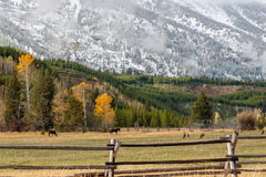 Nevicando nel Tetons Fotografia Stock