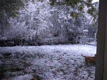Nevicando nel tx di Corpus Christi immagine stock libera da diritti