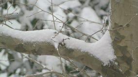 Nevicando su una compilazione del ramo di albero stock footage
