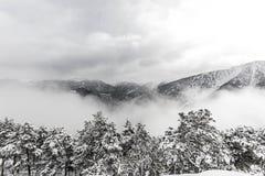 Nevicata Immagini Stock Libere da Diritti