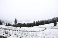 Nevicata della neve del paesaggio dello snView del paesaggio di vista coperta sull'albero alpino in cima alla montagna nel parco  Fotografia Stock