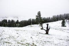 Nevicata della neve del paesaggio dello snView del paesaggio di vista coperta sull'albero alpino in cima alla montagna nel parco  Immagini Stock Libere da Diritti