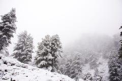 Nevicata della neve del paesaggio dello snView del paesaggio di vista coperta sull'albero alpino in cima alla montagna nel parco  Fotografia Stock Libera da Diritti