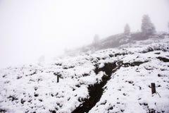 Nevicata della neve del paesaggio dello snView del paesaggio di vista coperta sull'albero alpino in cima alla montagna nel parco  Immagini Stock