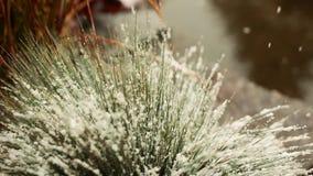 Nevicata lentamente - paesaggio adorabile di inverno con neve che cade lentamente e coperto spruce di fine della neve su Neve e p stock footage