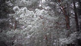 Nevicata, movimento lento video d archivio