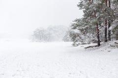 Nevicata pesante e pini sul Soesterduinen fotografia stock