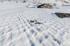 Nevichi come le onde congelate dai venti dell'inverno Fotografia Stock Libera da Diritti