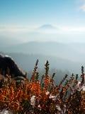 Nevichi nella fioritura rossa del cespuglio dell'erica sulla scogliera in parco Campagna collinosa con la valle lunga piena della Fotografia Stock