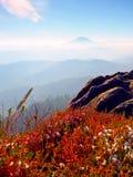 Nevichi nella fioritura rossa del cespuglio dell'erica sulla scogliera in parco Campagna collinosa con la valle lunga piena della Fotografia Stock Libera da Diritti