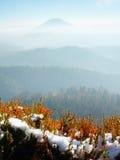 Nevichi nella fioritura rossa del cespuglio dell'erica sulla scogliera in parco Campagna collinosa con la valle lunga piena della Fotografie Stock