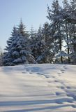 Nevichi nella foresta e nelle orme del coniglietto Immagine Stock Libera da Diritti