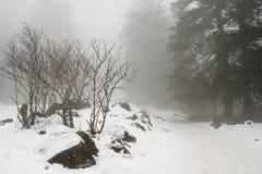 Nevoento foto de stock