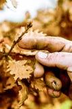 Farmers hand with new tree shoots Royalty Free Stock Photo