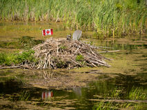 New Age Beaver Lodge Royalty Free Stock Images