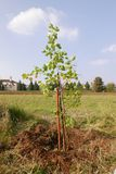 New apricot tree stock images