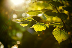 New autumn landscape Stock Photography