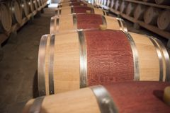 New Barrels in Wine Cellar. New red wine barrels in modern wine cellar in Tuscany royalty free stock photo
