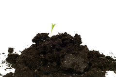 New Beginning Concept. Concept image of a new beginning with some new plant growth coming out of a mound of soil, isolated against a white background Royalty Free Stock Images