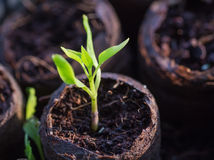 New beginning  spring sprouts Stock Photos
