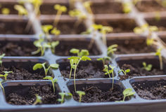 New beginning  spring sprouts Stock Images