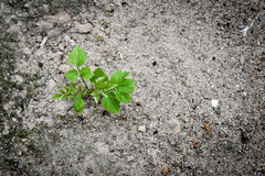 A new beginning young plant grow in a dry soil Stock Photography