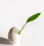New beginnings. Egg and plant leaf new beginnings concept Royalty Free Stock Photos