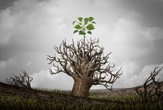 New Beginnings. New beginning and the cycle of life concept of hope and recovery as a sapling plant growing from a dead tree as a psychology of a start or young Royalty Free Stock Image