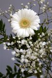 New beginnings bouquet Daisy flowers white petals loyal love Royalty Free Stock Photo