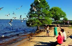 New Bern, NC: Family Feeding Seagulls Royalty Free Stock Photography