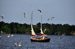 New Bern, NC: Gulls and Sailboat on Neuse River Stock Image