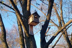 New big wooden birdhouse on tree in the forest Royalty Free Stock Photography