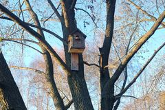 New big wooden birdhouse on tree in the forest Royalty Free Stock Image
