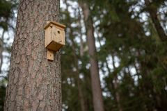 A new bird feeder suspended on a tree. Birdhouse in a nature res royalty free stock image