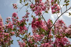 New Blooming Flowers in Spring Tree Branches stock image