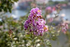 New Blooming Flowers in Spring royalty free stock photos