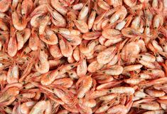 New boiled shrimps Stock Photos