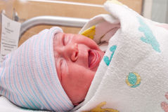 New Born Stock Photo