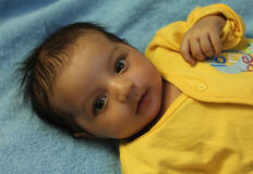 New born asian baby girl looking at viewer. In yellow dress in blue bakcground. Baby is one and half month old. Asian baby girl royalty free stock photos