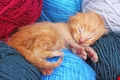 New born baby cat sleeping. Cute beautiful little few days old orange cream color kitten. Newborn abandoned rescued. Orange cat kitten. Cute Stock Photography