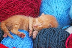 New born baby cat sleeping. Cute beautiful little few days old orange cream color kitten. Newborn abandoned rescued. Orange cat kitten. Cute stock images