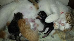 New born baby cats with mother cat stock images