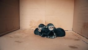 New born baby kittens moving together in a carton box. Front view of four new born kittens moving together in a carton box stock video