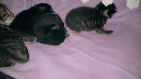 New born baby kittens resting together in a cat basket. Top view of four new born kittens resting together in a cat basket near central heating stock footage