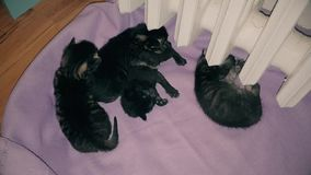 New born baby kittens resting together in a cat basket. Top view of four new born kittens resting together in a cat basket near central heating stock video