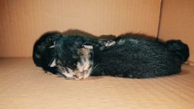 New born baby kittens sleeping together in a carton box. Closeup of four new born kittens sleeping together in a carton box stock footage