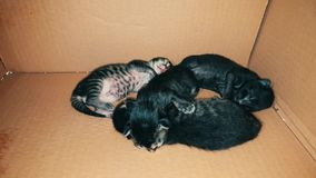 New born baby kittens sleeping together in a carton box. Front view of four new born kittens sleeping together in a carton box stock video footage